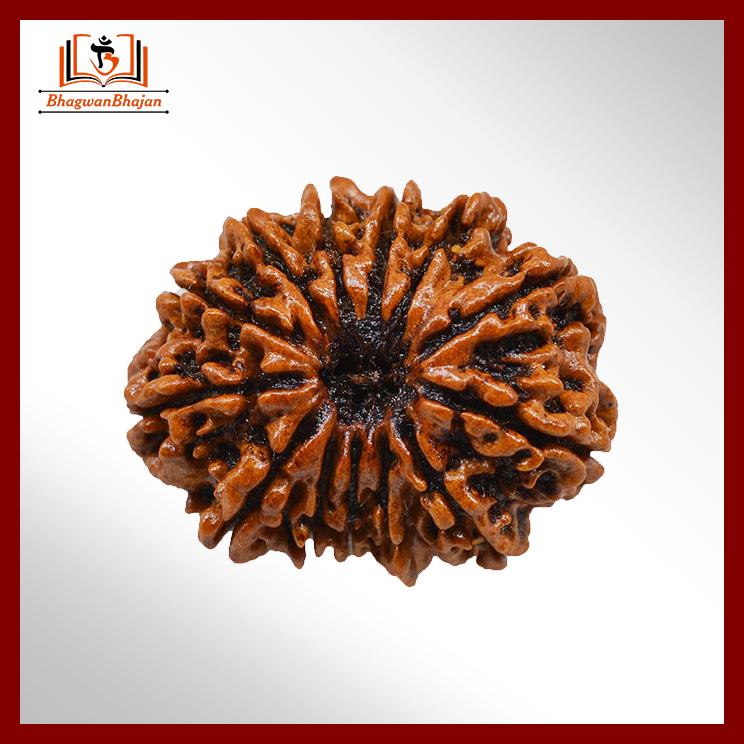 13-Mukhi-Rudraksha-Collector-2