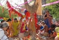 Akshaya Navami or Amla Navami Significance & Importance in Hinduism